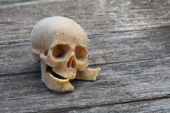 与一块人的头骨的静物画 库存照片