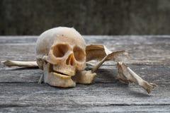 与一块人的头骨的静物画 免版税图库摄影