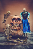 与一块人的头骨的静物画 免版税库存图片