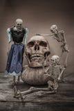 与一块人的头骨的静物画 免版税库存照片