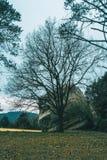 与一块大石头的石头和没有叶子的一棵树 免版税库存照片