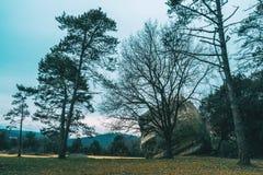 与一块大石头的石头和没有叶子的一棵树 库存图片