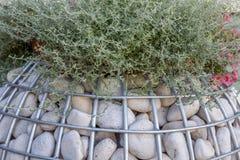 与一块石头的Gabion种植的园林植物特写镜头 风景设计的概念 免版税库存照片