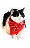 与一块红色班丹纳花绸的猫 免版税库存照片