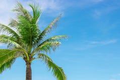 与一多云天空蔚蓝的可可椰子树,拷贝空间 图库摄影