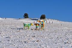 与一头被绘的母牛和小牛的冬天场面在牧场地 免版税库存照片