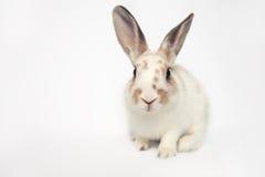 与一巨大眼睛微笑的可爱的小兔子 库存照片