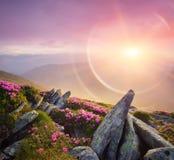 与一座美丽的日出和山的夏天风景开花 库存图片