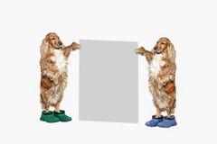 与一张海报的两条狗文本的 免版税图库摄影