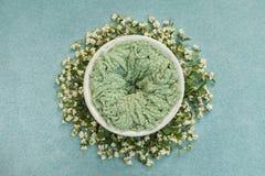 与一张绿色席子的巢新生儿照片写真的,装饰用小树枝用白色莓果 免版税库存照片