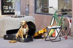 与一把吉他的狗在史特拉斯堡 免版税库存照片
