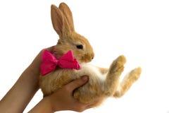 与一把弓的兔子在儿童的手上 库存照片