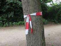 与一把红色和白色弓的树在公园 库存图片