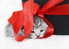 与一把红色弓的逗人喜爱的小猫 免版税库存照片