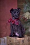 与一把红色弓的黑小狗 免版税库存照片