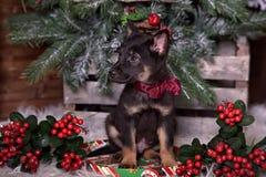 与一把红色弓的黑小狗 免版税图库摄影