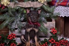 与一把红色弓的黑小狗 免版税库存图片