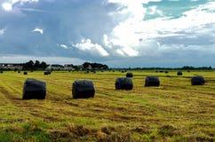 与一把领域和干草的夏天农村风景在福伦丹,荷兰 免版税库存图片