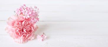 与一支桃红色康乃馨的嫩静物画 库存照片