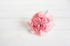 与一支桃红色康乃馨的静物画 免版税图库摄影