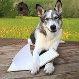 与一支铅笔的拉雪橇狗读书在它的嘴 免版税库存照片