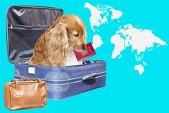 与一本护照的狗在手提箱掩藏的嘴 免版税图库摄影