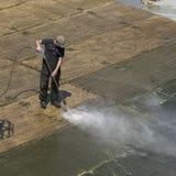与一朵喷水的浪花的清洁海藻 库存照片
