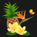 与一朵天堂花和一只蝴蝶的赤素馨花羽毛,用在黑背景的菠萝 皇族释放例证