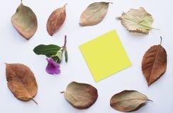 与一朵小的桃红色花的黄色提示贴纸与在角落的下落的叶子 免版税库存图片