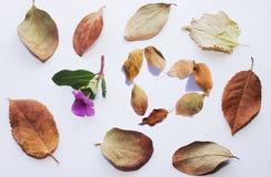 与一朵小的桃红色花的黄色提示贴纸与在角落的下落的叶子 库存照片