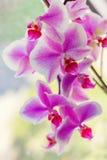 与一朵开花的兰花的抽象背景 免版税库存图片