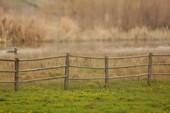 与一朵木篱芭、绿草、黄色野花、鸭子游泳和被弄脏的背景的一个农村国家场面 库存图片