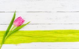 与一朵桃红色郁金香花的贺卡在白色木背景的一个绿色边界与文本的空间 图库摄影