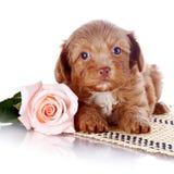 与一朵玫瑰的小狗在地毯 库存图片