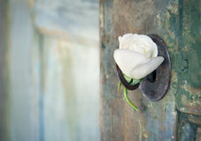 与一朵白色玫瑰的绿色老木门 库存照片
