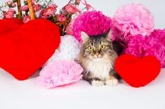 与一朵红色心脏和纸花的美丽的猫 库存照片