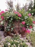 与一朵老木桶的构成和各种各样的植物和花 图库摄影