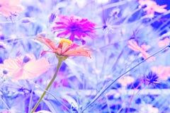 与一朵花的被弄脏的抽象背景在早晨阳光下 免版税库存照片
