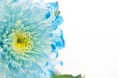 与一朵蓝色花的温泉概念 免版税库存照片