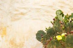 与一朵黄色花的一个仙人掌对墙壁 库存照片