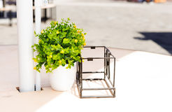 与一朵绿色花的白色花盆 库存照片