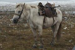 与一杆枪的一匹马在位子下 图库摄影