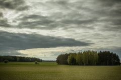 与一束的绿色领域树在阴暗夏日 库存照片