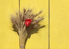 与一束的背景成熟金黄麦子头和红色鸦片 免版税库存照片