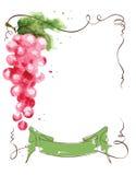 与一束葡萄的酒标签和丝带 库存例证