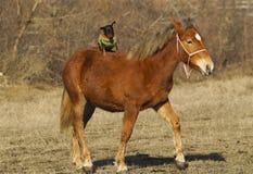 与一条小棕色狗的红色马在后面立场 库存照片