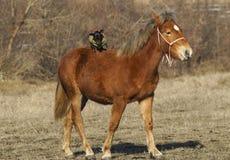 与一条小棕色狗的红色马在后面身分 库存图片