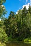 与一条小河的夏天风景 免版税库存图片