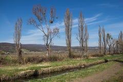 与一条小河的自然在春天 库存照片