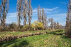 与一条小河的自然在春天 免版税库存照片